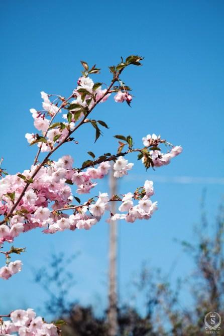 Vårens kännetecken.