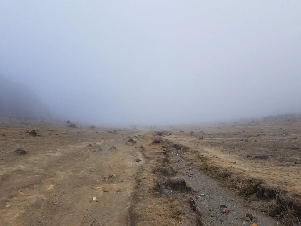 Pendakian Gunung Gede: Putri Lintas Cibodas - Menuju Surya Kencana (2/3) Jalur Surya Kencana Gunung Gede Berkabut 9