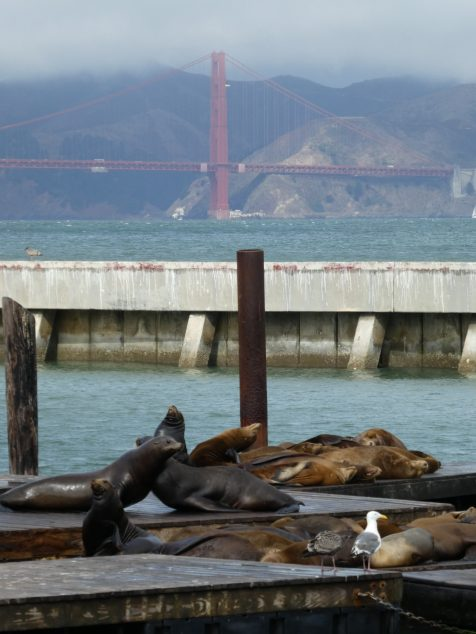Sea lions in San Francisco by hesaidorshesaid