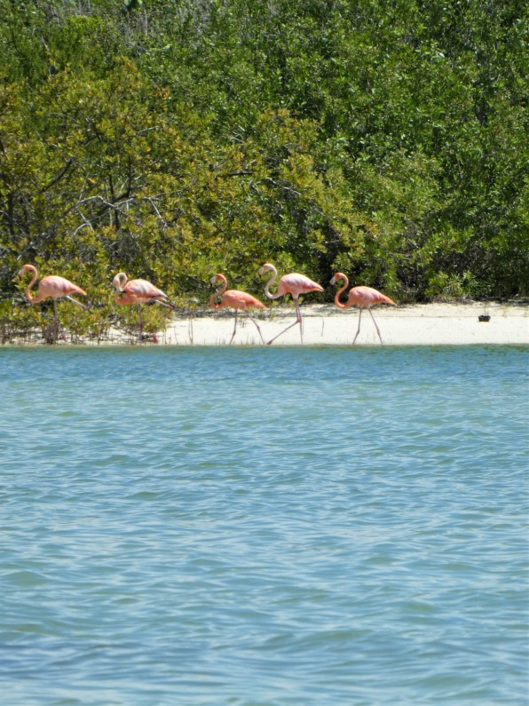 Flamingos in Holbox by hesaidorshesaid
