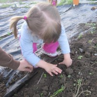 summerplanting