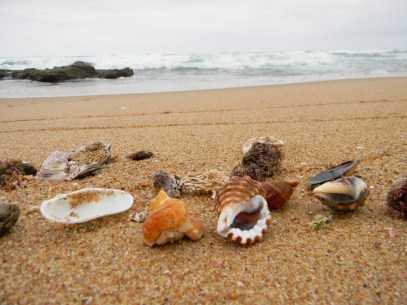 Shells collected during an early morning stroll on the beach