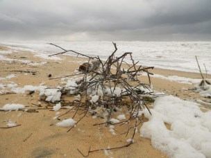 Debris on the beach after the storm