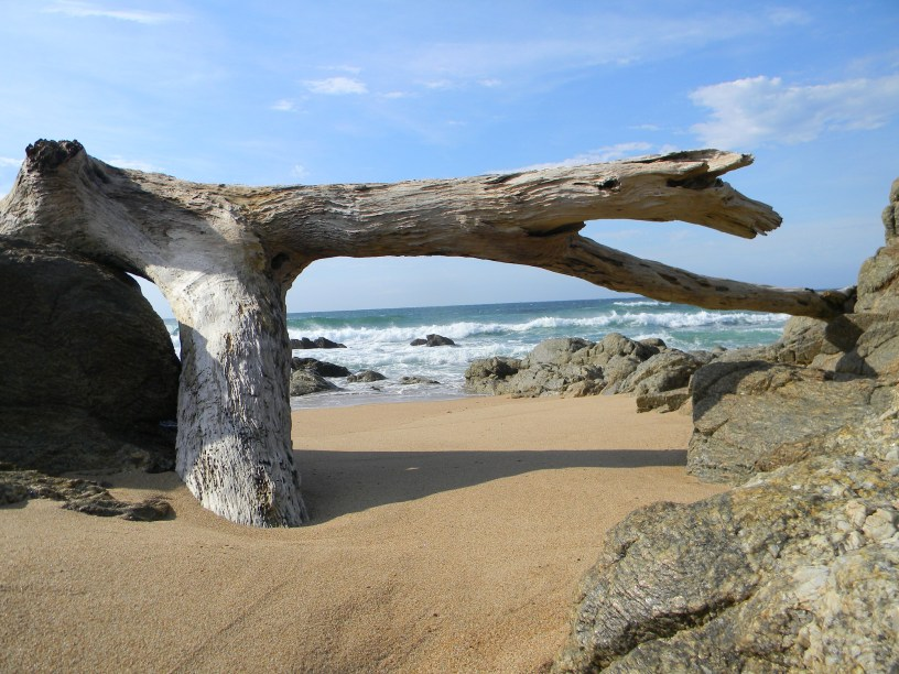 Driftwood wedged in the sand at Anerley