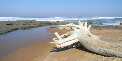 Driftwood Ifafa Beach