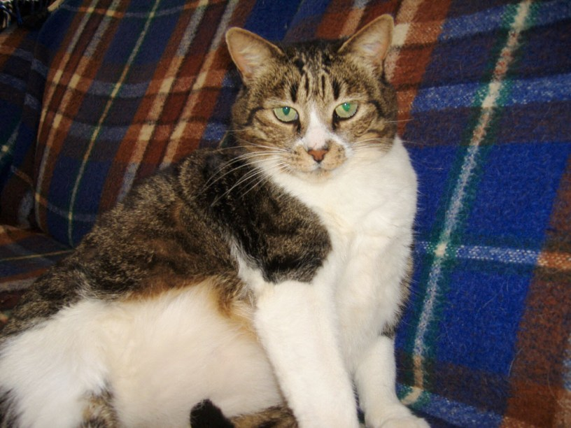 Image of a moggy