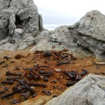 Nuts and bolts in a rockpool next to Sea Park