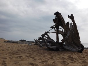 Driftwood on Southport Beach