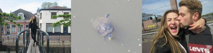 Amersfoort foto collage stad schildpad liefde