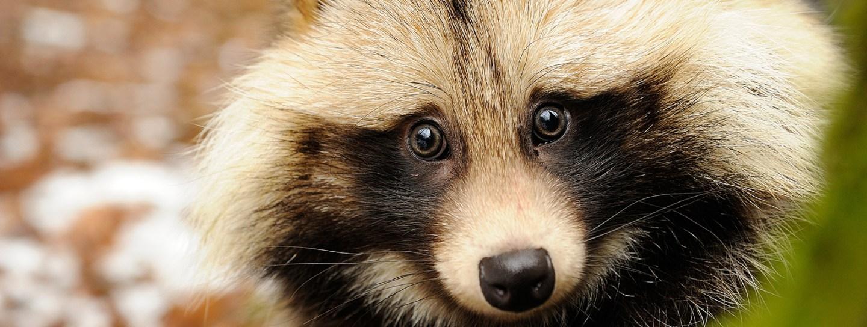 Stop de bontindustrie in China – Bont voor dieren