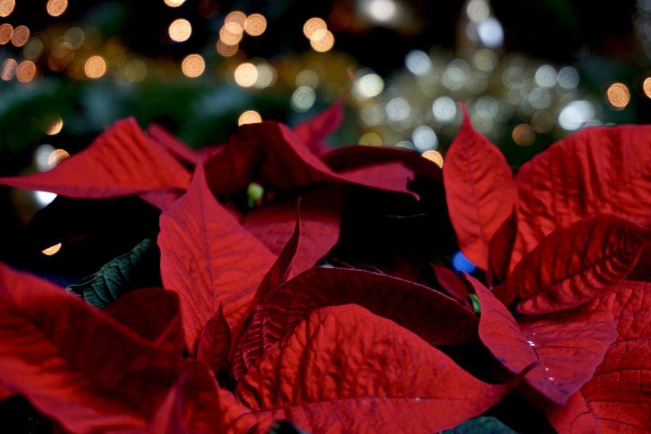 Kies voor een Fairtrade kerstster