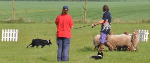 Foto schapen drijven