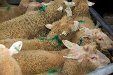 Prijsontwikkeling op veemarkten in 2018