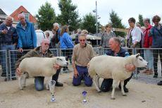 Texelaar keuring TSNH Purmerend 2018 1jarige ooien