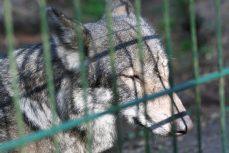 wolvenhek