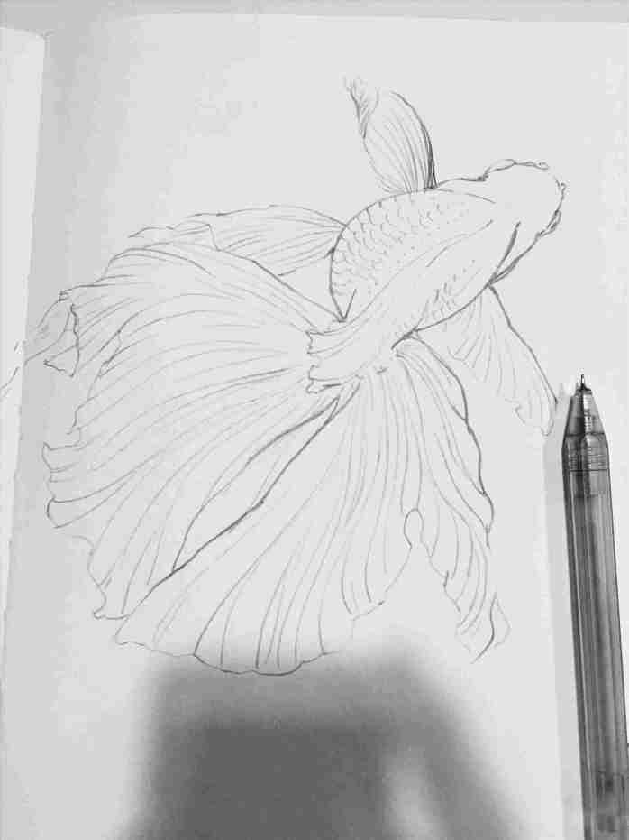 rhpinterestcom pencil 3D Fish Pencil Drawing drawings of nature step by