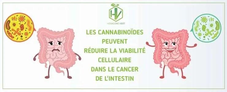 Les cannabinoïdes peuvent réduire la viabilité cellulaire dans le cancer de l'intestin
