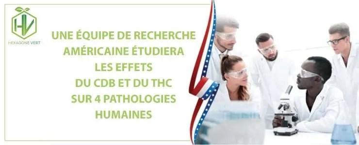 Une équipe de recherche américaine étudiera les effets du CDB et du THC sur 4 pathologies humaines