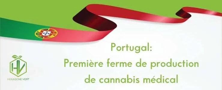 Portugal : première ferme de production de cannabis médical