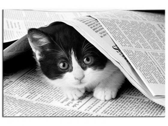 tableau noir et blanc deco chat dans journal