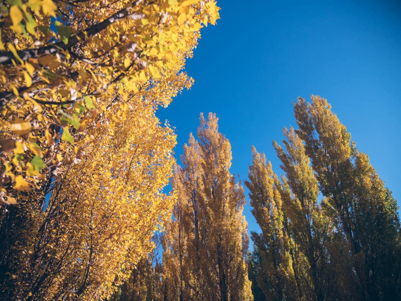 Sentiment d'automne
