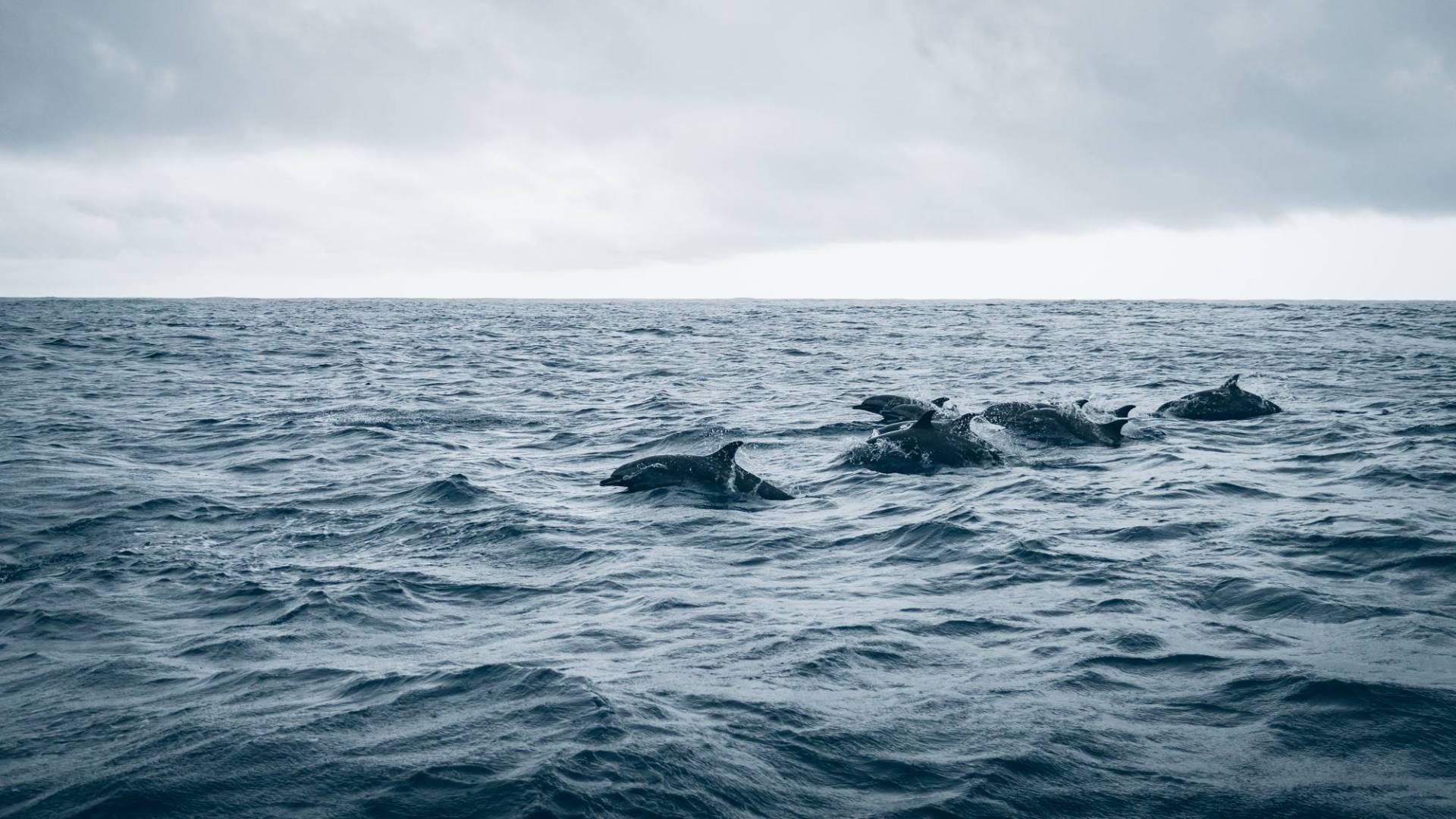 Un autre banc de dauphins