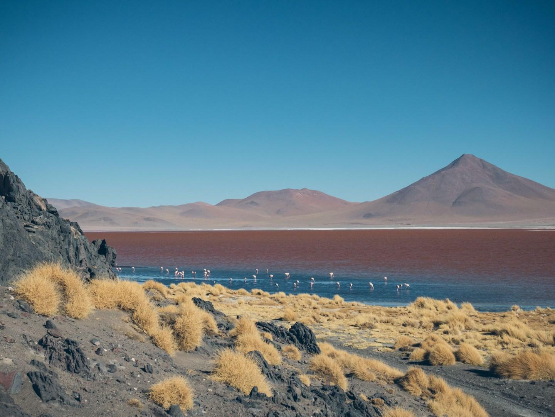 Petite balade à pied au bord de la laguna Colorada et les flamants roses