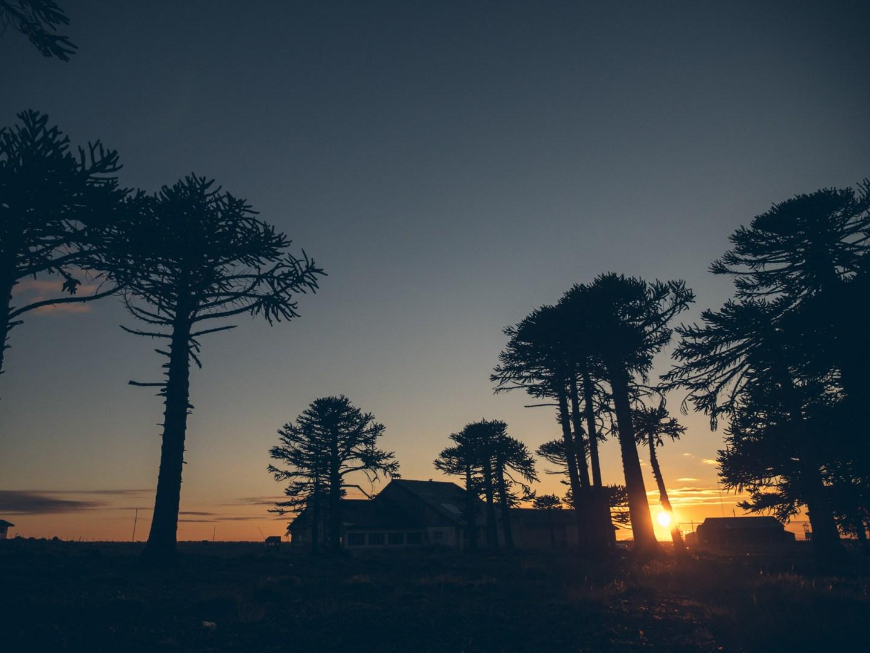 Primeros pinos