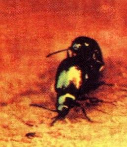 Beetles RAM McCartney