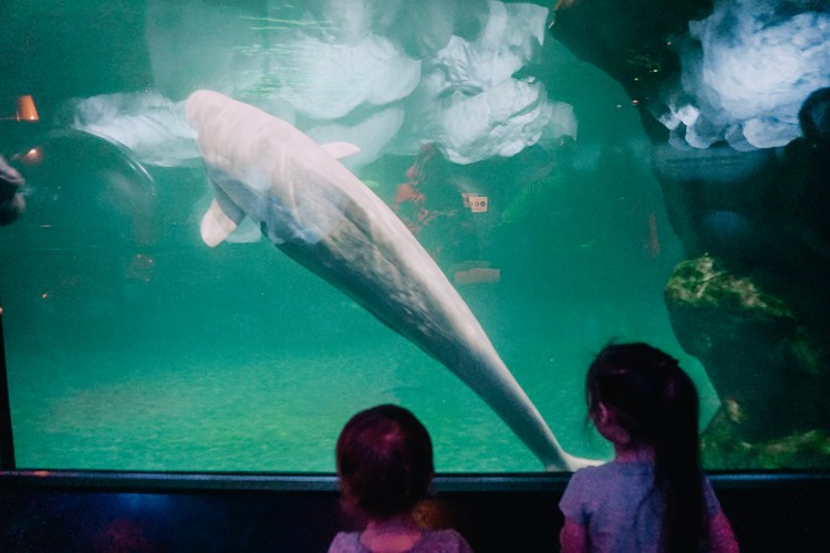 shedd aquarium chicago with kids blog