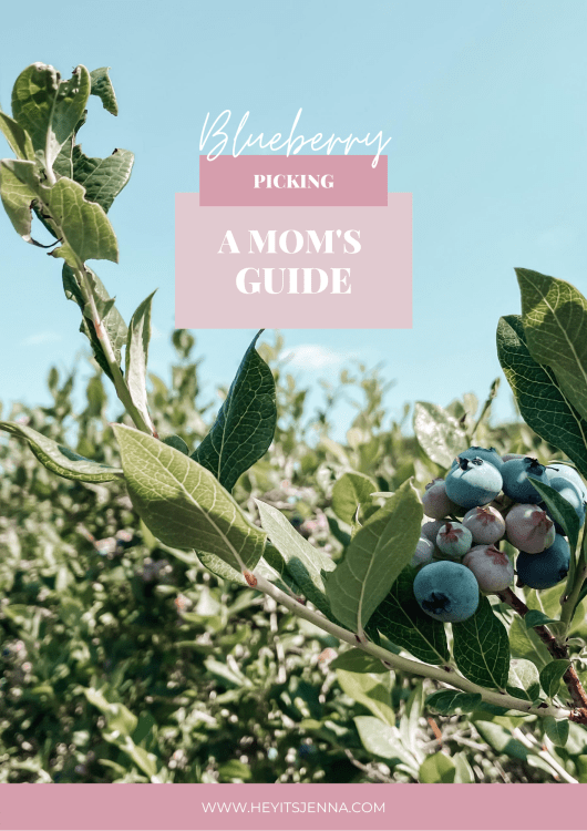 blueberry picking tips with kids