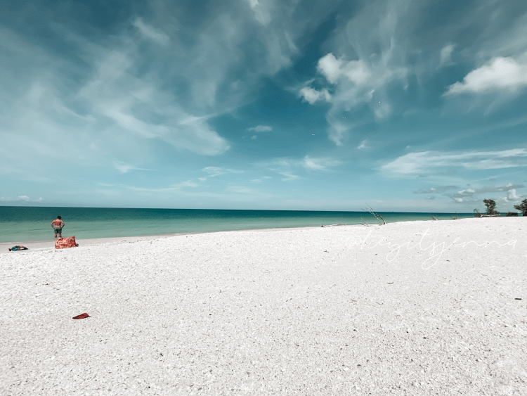 sand dollar spit shelling on marco island tigertail