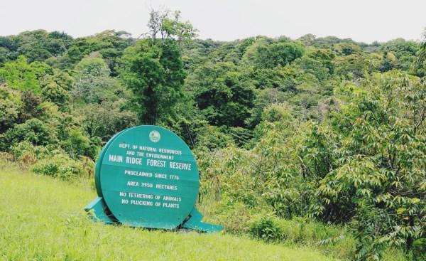 Tobago Main Ridge Forest Reserve