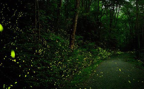 elkmont-fireflies-heysmokies