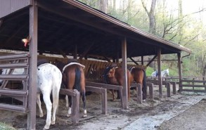Smokemont Riding Stable in Cherokee NC