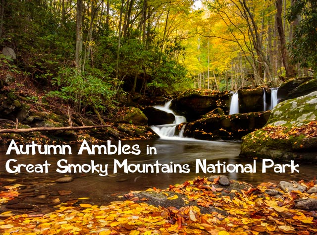 Autumn Ambles in Great Smoky Mountains National Park