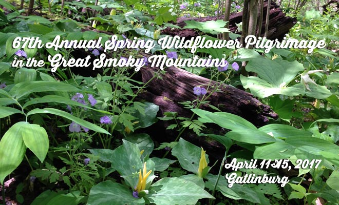 2017 Spring Wildflower Pilgrimage in Great Smoky Mountains set for April 11-15, 2017
