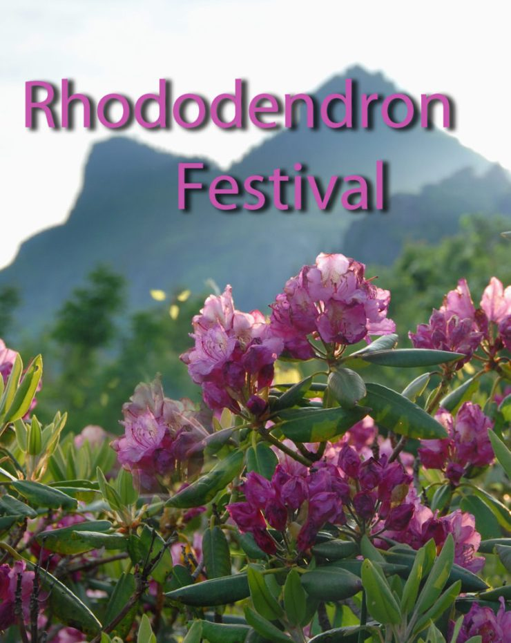 Grandfather Mountain Rhododendron Festival