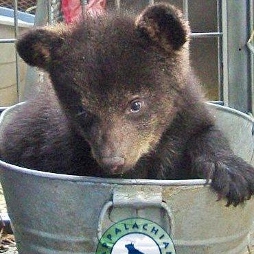 Help Appalachian Bear Rescue and HeySmokies save a cub!
