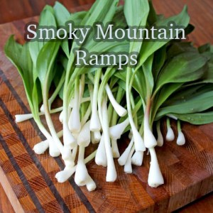 Smoky Mountain ramps are stinky and delicious!