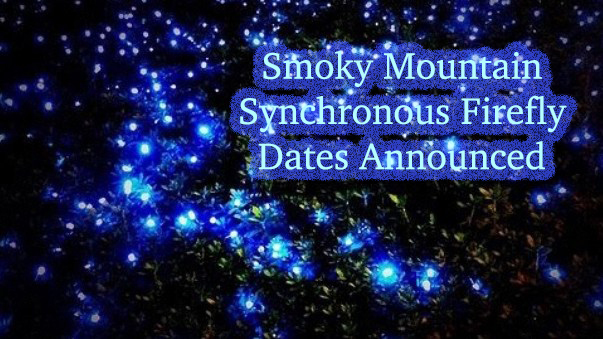 Smoky Mountain synchronous firefly dates announced.