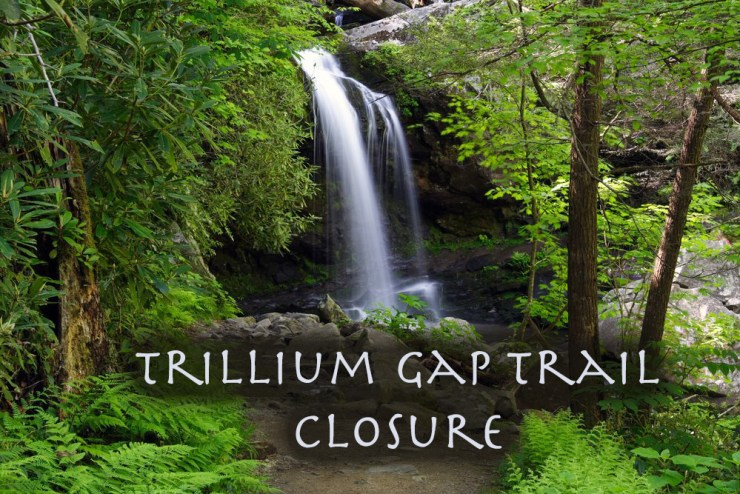 Trillium Gap trail closure in Great Smoky Mountains.
