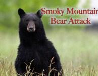 Smoky Mountain bear attack!