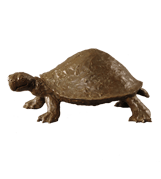 Turtle-button