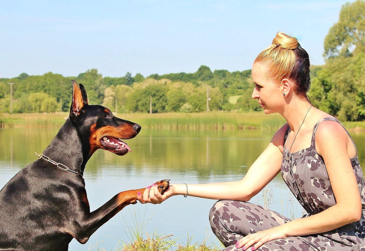 lady shaking hands with the dog