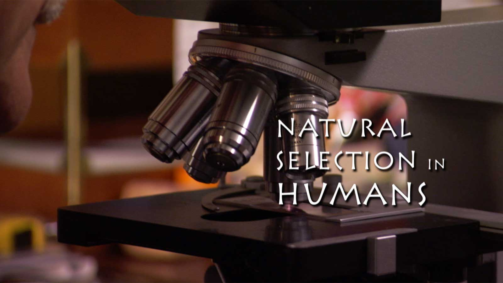 The Making Of The Fittest Natural Selection In Humans