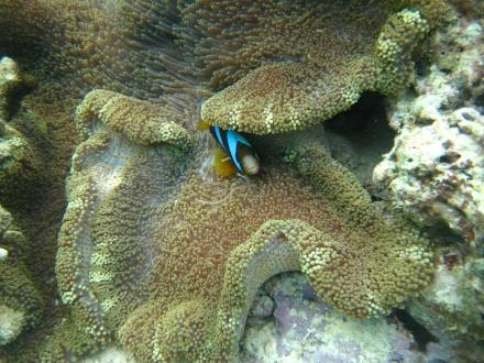 Great Barrier Reef - diving