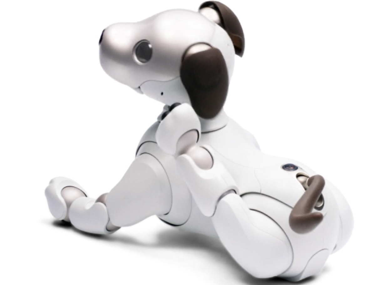 Aibo scratching