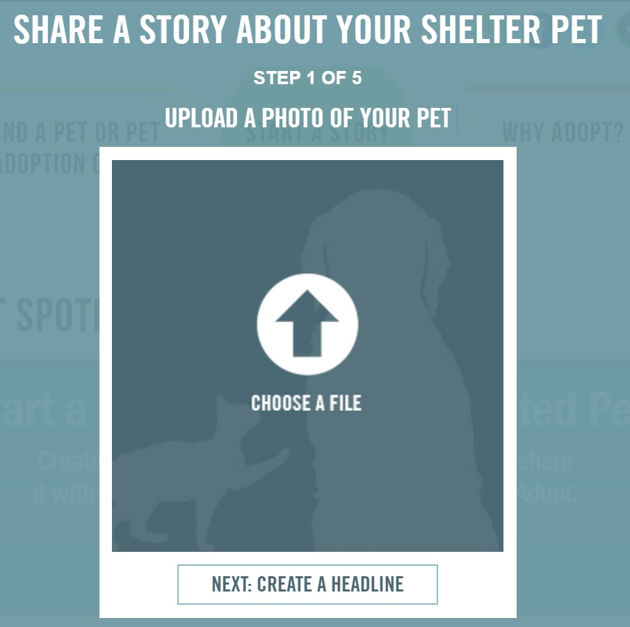 Shelters 2018 2