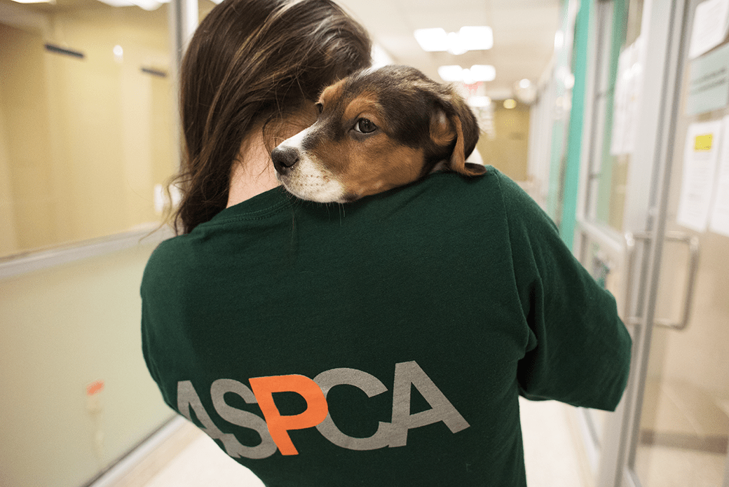 ASPCA Person